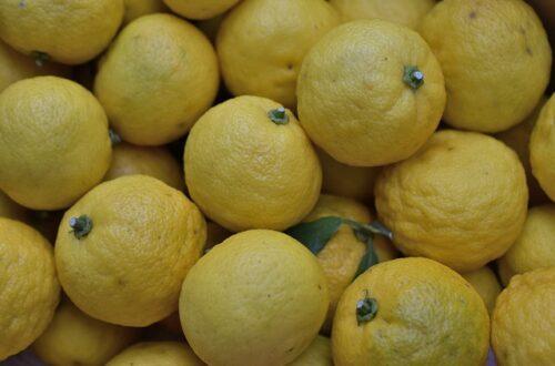 Fresh Yuzu fruit