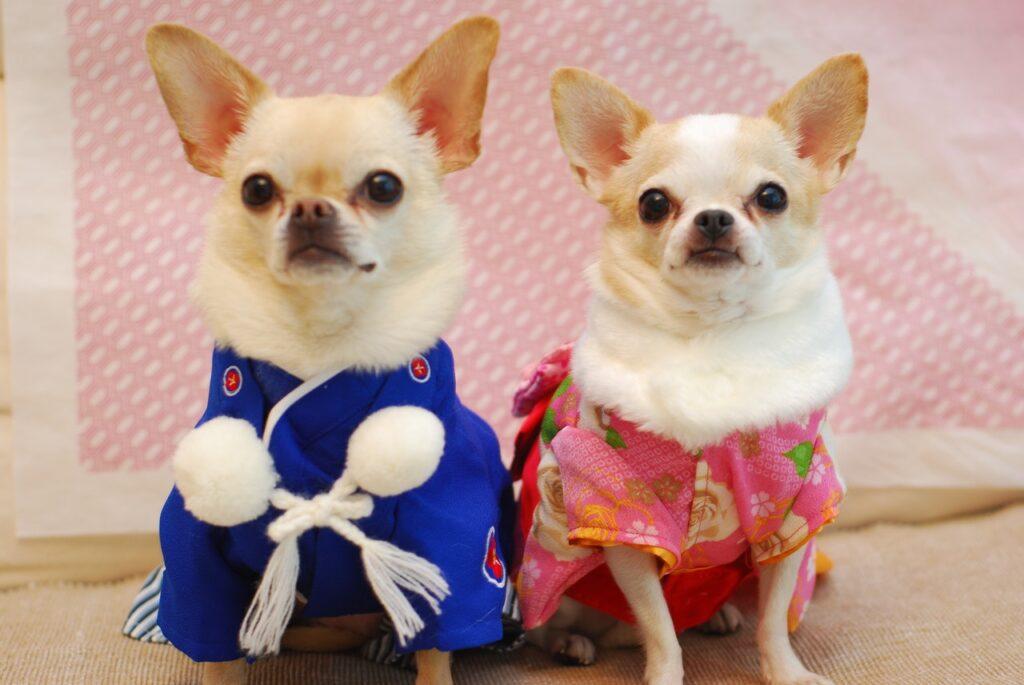 Japanese pets