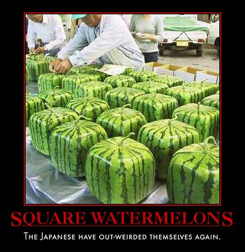 Square Watermelons! Photo by ?who? on www.flickr.com.