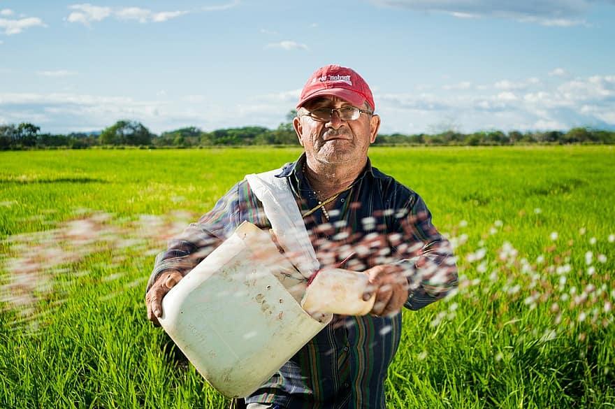 Worker in Paddy Field